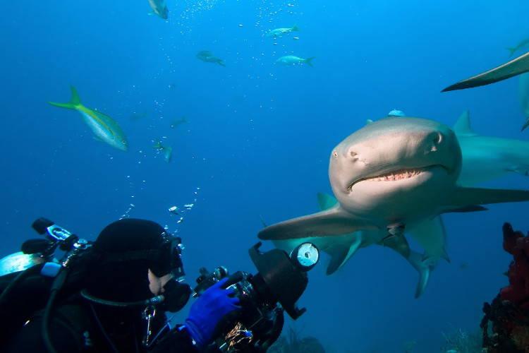 Акулы у берегов Австралии