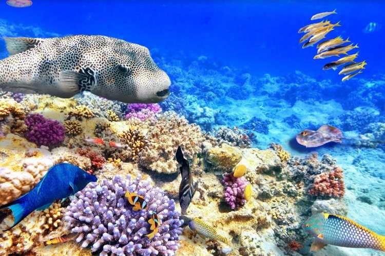 Самое глубокое в мире Коралловое море