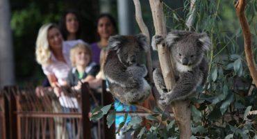 Лоун Пайн Коала (Коала-парк) в Брисбене
