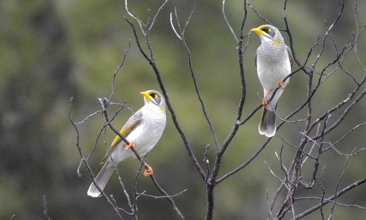 Национальный парк Янчеп